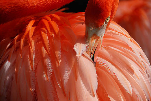 Feathered by Lorenzo Cassina