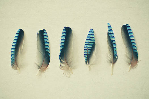 Feathers No1 by Cassia Beck