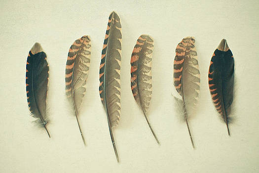 Feathers No2 by Cassia Beck