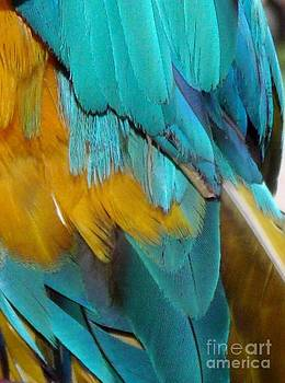 Gail Matthews - Feathers of the Macaw