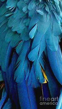 Gail Matthews - Feathers of the Macaw Parrot