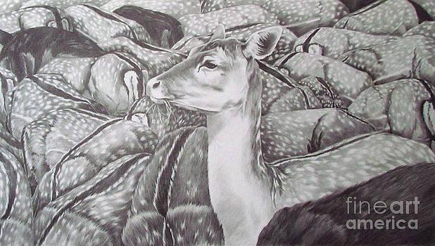 Feeding Fallow Deer by Deborah Johnson