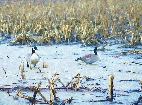 Rosemarie E Seppala - Feeding Swimming In The Field