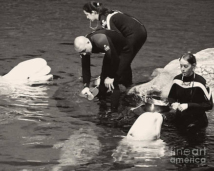 Emily Kelley - Feeding The Belugas