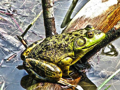Joe Bledsoe - Feelin Froggy