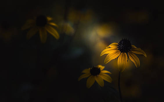 Feeling A Little Blue by Paul Barson