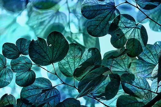 Arkamitra Roy - Feeling Blue