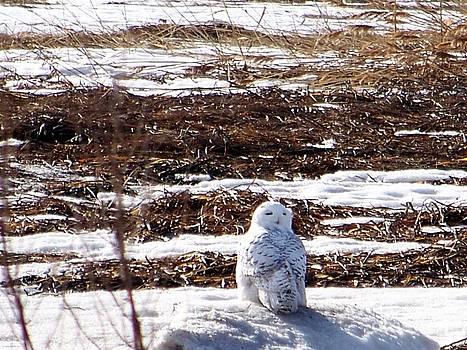 Rock Star Owl by Eunice Miller