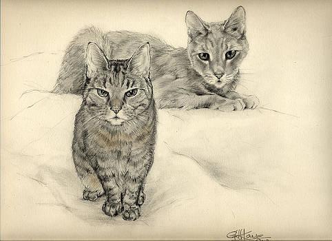 Feline Friends by Gill Kaye