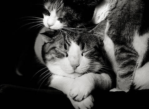 Feline love  by Laura Melis