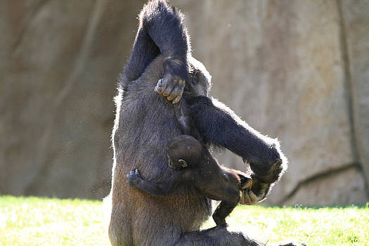Female and baby Gorilla by Edward R Wisell