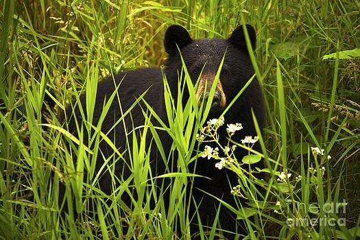Female Black Bear and Cub by Andrew Dobrzanski