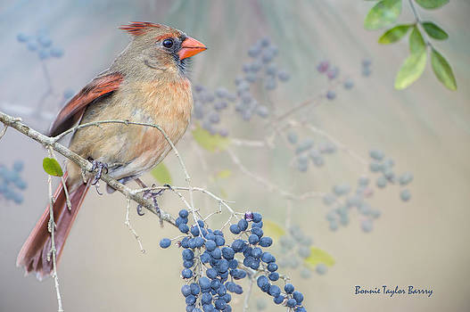 Female Cardinal and Wild Berries by Bonnie Barry