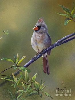 Female Cardinal  by Margit Sampogna