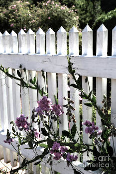 Fence and Flowers  by Eva Thomas