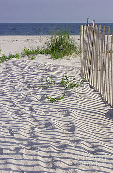 Fence and Shadow by Jeanne Forsythe
