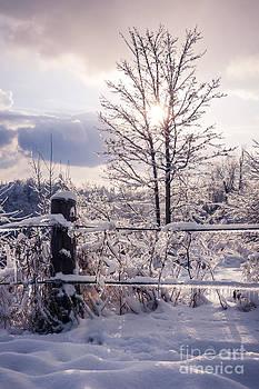 Elena Elisseeva - Fence and tree frozen in ice