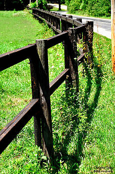 Fence by Christine May