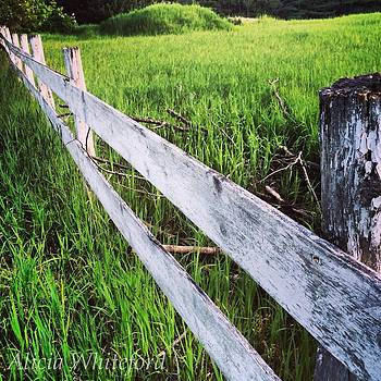 Fence of a Lifetime  by Alicia Whiteford