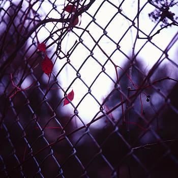 Fenced In by Ian Wilson