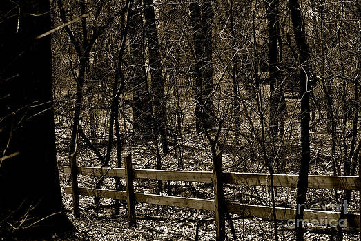 Frank J Casella - Fence In The Woods