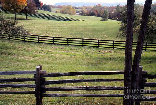 Fences and Fields by Eva Kato