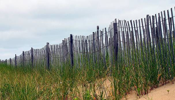Fences and Sea Grass by Carolyn Ricks