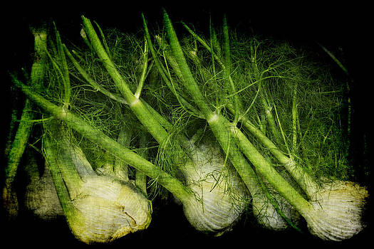 Flemish Fennel Art by Jennifer Wright