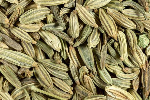 Fennel seeds macro by Paul Cowan