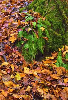 Fern among Golden Fall by Mary Frances