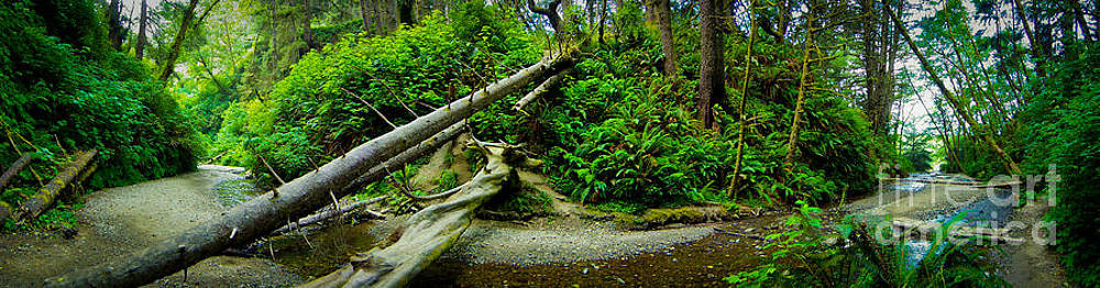 Fern Canyon Panoramic by Dan Julien