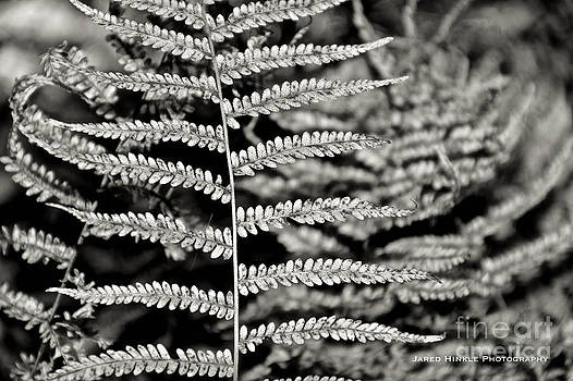 Fern by Jared Hinkle