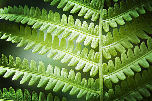Carolyn Cochrane - Fern Leaf