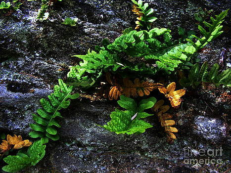 Fern On Rock by Steve Patton
