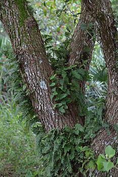 Fern Tree by Jennifer Zirpoli