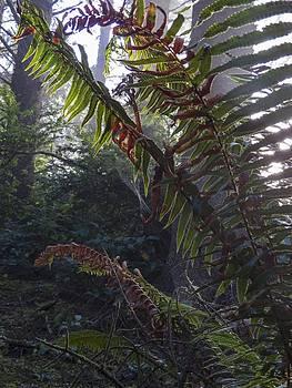 Ferns and Spiderwebs by Kristal Talbot