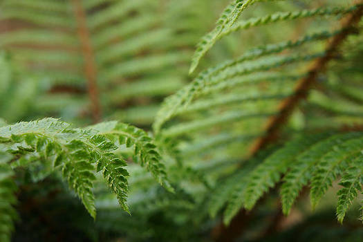 Baslee Troutman - Ferns Art Prints Green Fores Fern