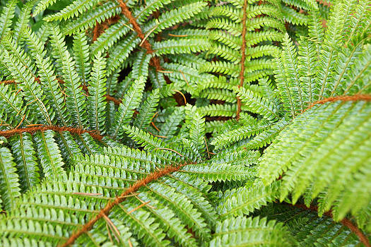 Baslee Troutman - Ferns Forest Art prints Green Fern Fronds
