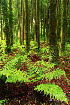 Gaspar Avila - Ferns in the forest