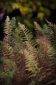 Ferns of Fall by Michael Donahue
