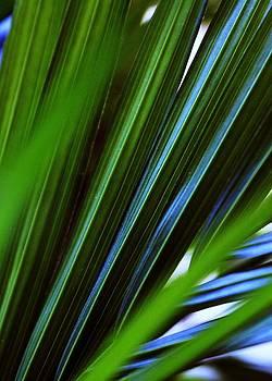Ferns by Pierre Labrosse