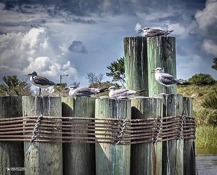 Ferry Landing by Phil Mancuso