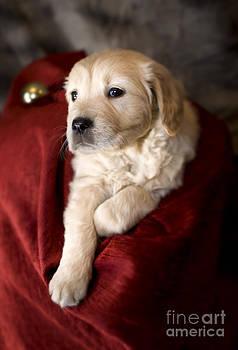 Angel Ciesniarska - festive pup