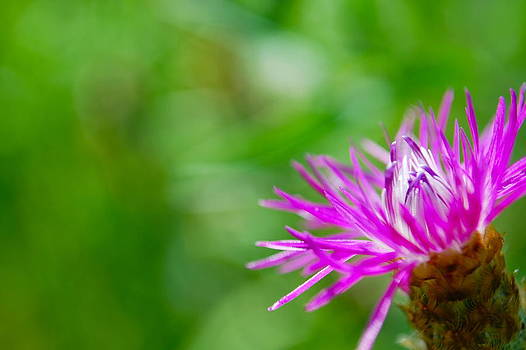 Fiber Optic Floral by Lauren Mackay