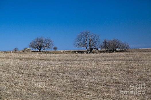 Field - Champs by Nicole  Cloutier Photographie Evolution Photography