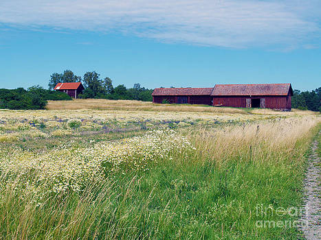 Field and Barns by Robin Maria Pedrero