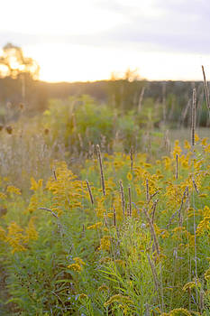 Field at Sunset by Sarah Yost