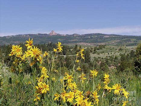 Field Below Castle Peak by Dana Carroll