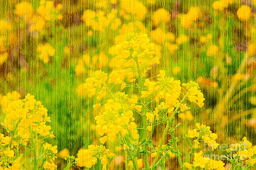 Beverly Claire Kaiya - Field Mustard Flowers with Wooden Planks Overlay