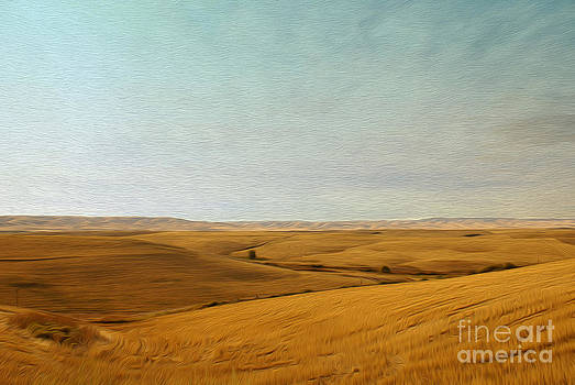 Field by Nur Roy